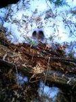 鹿の足跡.jpg